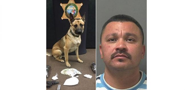 K-9 discovers drugs man tried to hide
