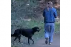 A Dog Walker is Arrested for Biting and Robbing a Jogger