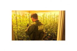 Illicit Marijuana farming syphoned off $$$ in So Cal energy