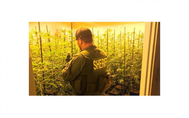 Illicit Marijuana farming syphoned off $$$ in So Cal energy