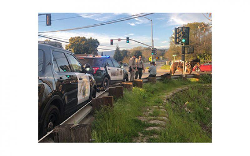 Santa Cruz Police Department Makes 2 Bizarre Arrests