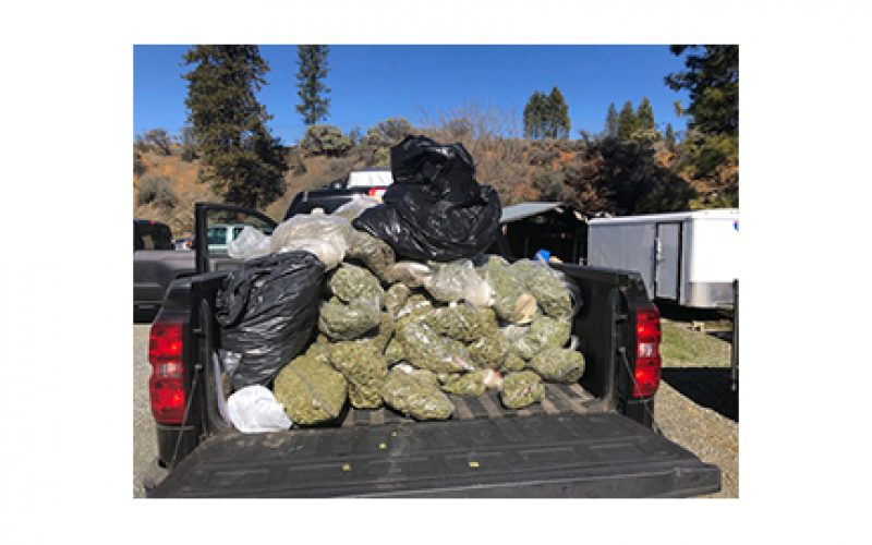 Investigation leads to illegal marijuana grow and production site