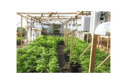 Two Illegal Grow Sites Destroyed in Calaveras County