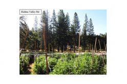 Three search warrants in Two days leads to Marijuana Grow Site eradication