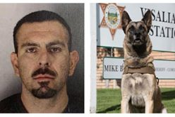 K9 Deputy Shot by Undercover Detective During Arrest of Wanted Suspect
