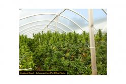 Over 4,000 Marijuana Plants Eradicated in Sheep Ranch
