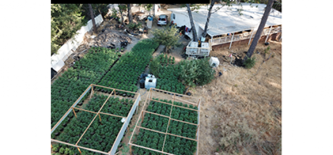 Five Illegal grow sites busted in four days