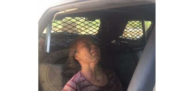 Merced Sheriff: Astute K-9 tracks domestic violence suspect to chicken coop