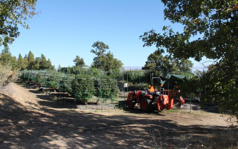 Lassen County authorities eradicate three illegal marijuana cultivation sites