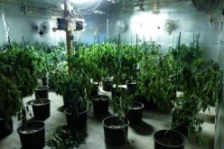 """Los Banos Police discover """"sophisticated"""" marijuana grow operation in converted warehouse"""