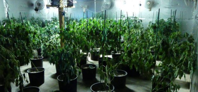 "Los Banos Police discover ""sophisticated"" marijuana grow operation in converted warehouse"
