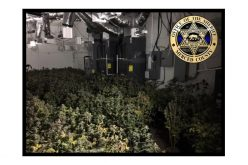 Two arrested in burglary, officer-involved shooting at marijuana grow