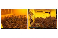 No arrests made in discovery of marijuana grow house