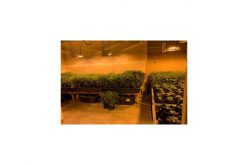 Large marijuana grow site discovered and busted