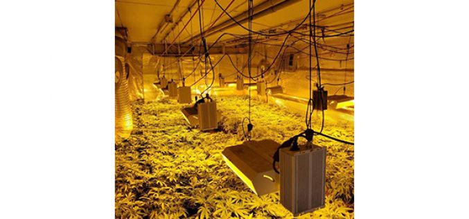 Illegal Indoor Cannabis Grow in East Linda