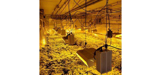 Illegal Indoor Cannabis Grow in East Linda
