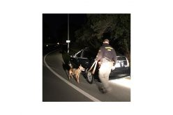 K-9 Yahtzee and deputies catch three suspects with drugs