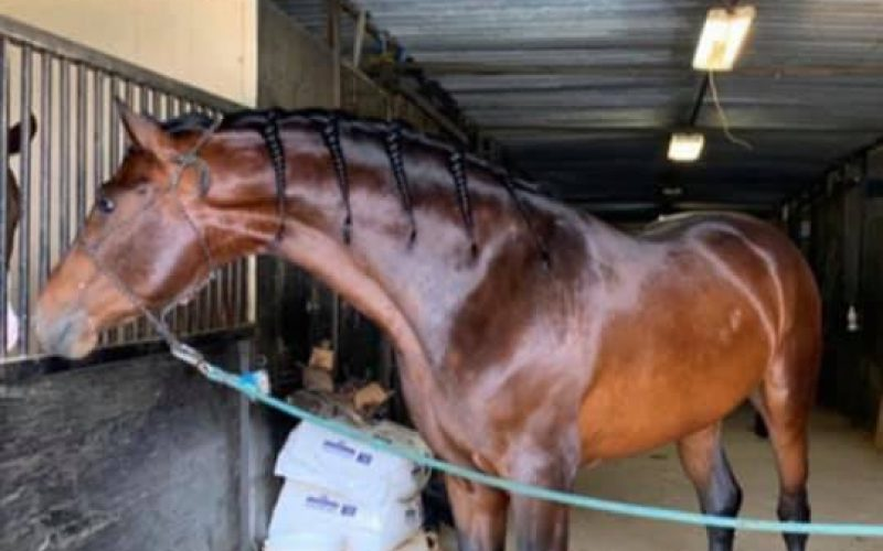 Chowchilla Horse Trainer Arrested for Animal Cruelty