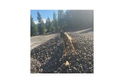 Busy seven days in Mount Shasta