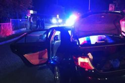K9 helps vehicle theft suspect exit stolen car