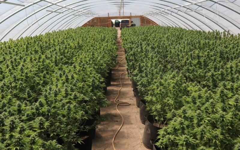 Sheriff's Office, Allied-Agency Partners Seize 5,191 Illicit Marijuana Plants