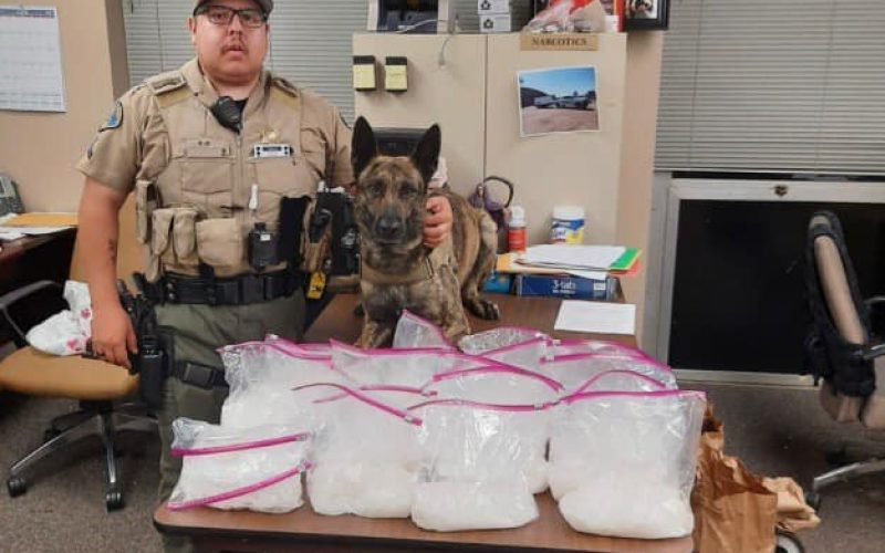 K9 Deputy Tex Finds 20 Pounds of Drugs During Traffic Stop