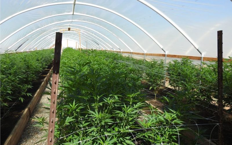 Calaveras County Sheriff's Marijuana Enforcement Team Activity