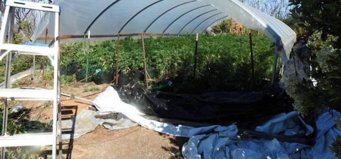 Calaveras County Marijuana Enforcement serves four warrants, arrests two
