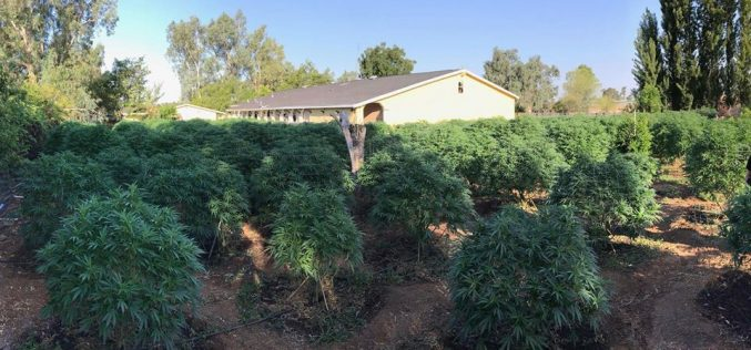Two illegal grow sites discovered, 849 plants eradicated