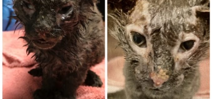 Animal Control Seeks Information in Suspected Animal Abuse Case