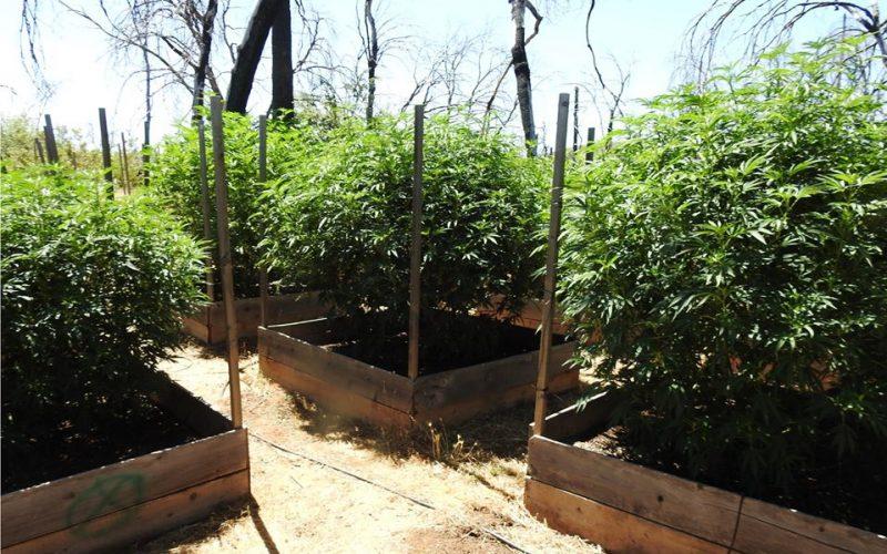 4 grow sites raided, 1 arrest, 2 citations