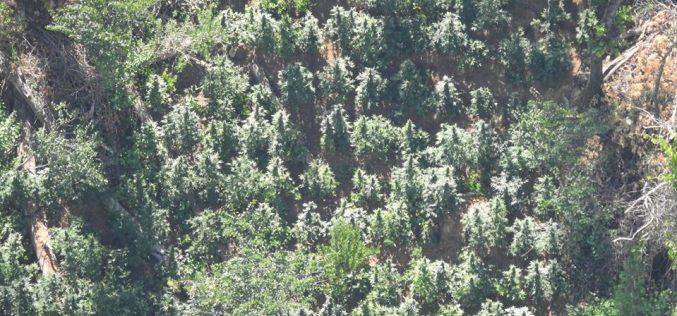 Calaveras Sheriff Marijuana Team Recap July 28th