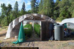 Calaveras Marijuana Team Recap August 18, 2020