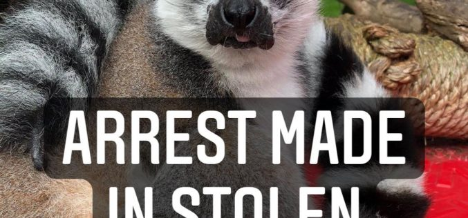 Man Accused of Stealing a Lemur from SF Zoo, Shoplifting and Vehicle Theft