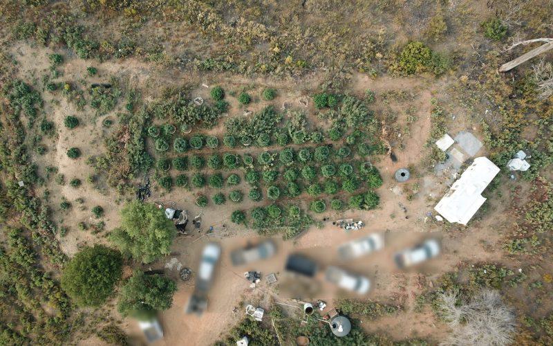 Calaveras County Marijuana Team Recap September 25th 2020