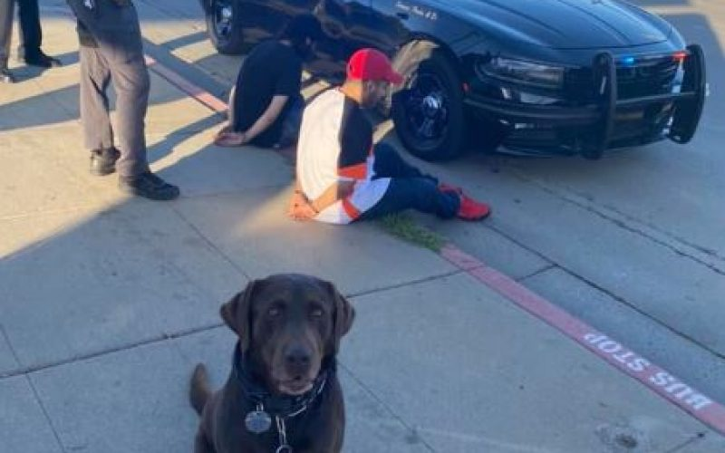 K9 Oakley at it again – two gang members nabbed