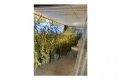 Kern County Sheriff's Office breaks up illegal marijuana grow operation