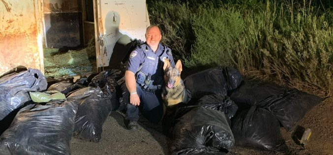 K9 Dutch helps detect horse trailer full of marijuana