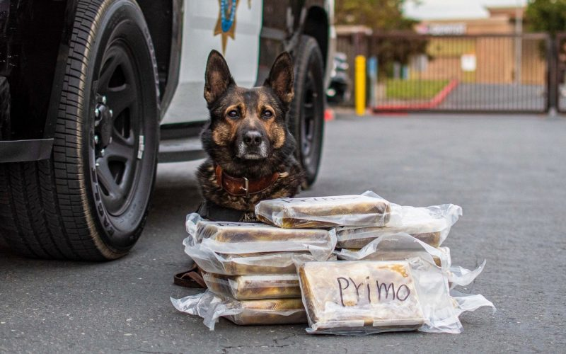 Merced CHP issues statement on K9 Beny's recent drug bust