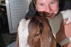 Animal Rights Activist Steals Goat