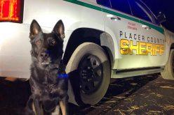 K-9 deputy Ronin helps Sheriff's Office, CHP apprehend vehicle theft suspect