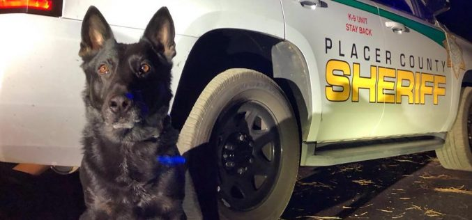 K-9 deputy Ronin helps Sheriff's Office, CHP apprehend vehicle theft suspect
