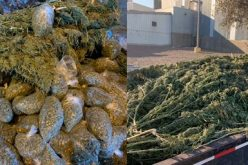 CONFISCATION OF OVER 1,000 POUNDS OF ILLEGAL MARIJUANA VALUED AT AN ESTIMATED $250,000