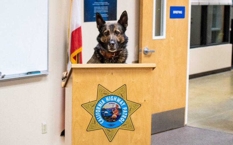 Merced CHP: K-9 Officer Beny uncovers suspiciously large amount of cash during traffic stop