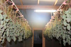 Glenn County authorities dismantle marijuana grow operation in converted warehouse