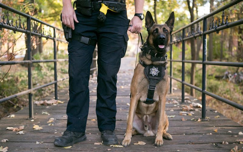 Chico Police K-9 Officer Pax helps apprehend man who ran from traffic stop