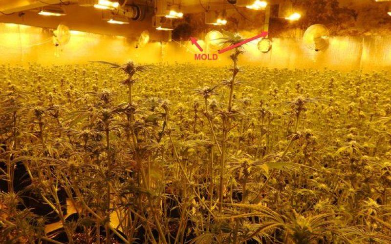 Calaveras County Sheriff's Office Marijuana Team Recap March 9, 2021