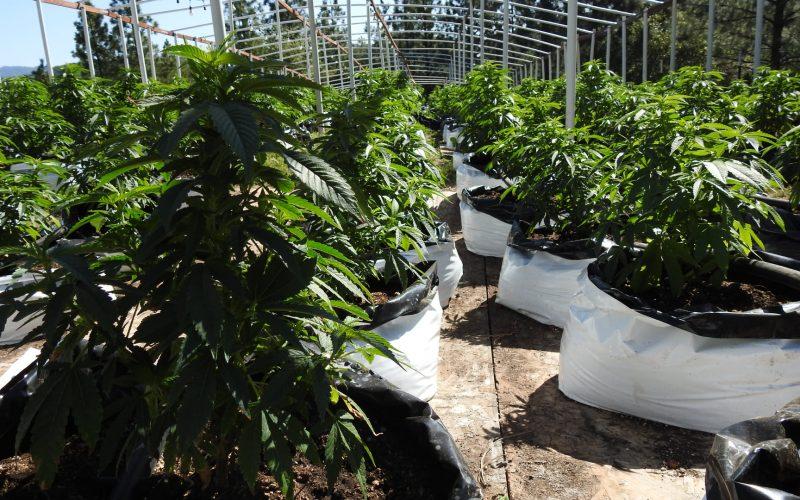Calaveras County Marijuana Team Recap April 8th, 2021