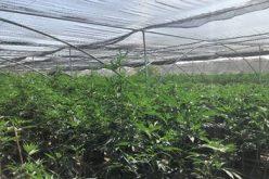 Vegetation Fire Reveals Massive Illegal Unregulated Indoor Marijuana Operation