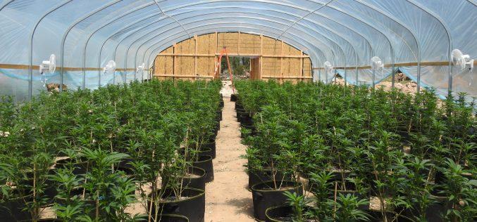 Calaveras County Sheriff's Office Marijuana Team Recap April 22, 2021